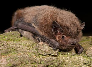 Grounded bat