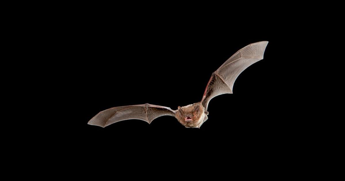 Problems Bat Conservation Ireland